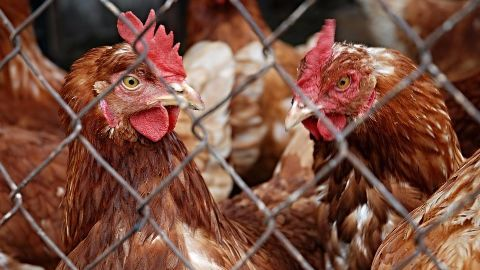 Meat ban reduced from 4 to 2 days