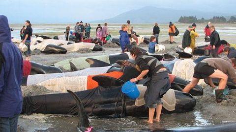Similar whale corpses washing up elsewhere