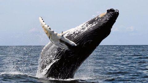 30 dead baleen whales on Tiruchendur shore
