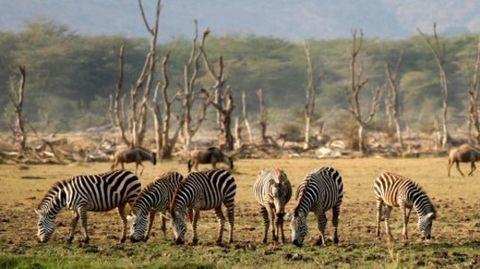 World Wildlife Day - Protect Wildlife!