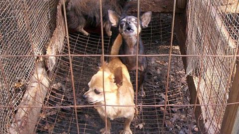 What is Yulin festival?