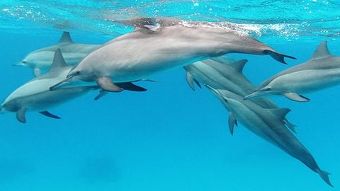 10 dolphins die in a month; no one notices