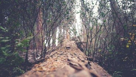 FIR against Faridabad ranger for tree felling