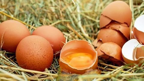 In the United Kingdom , found eggs with toxins