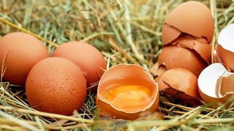 European egg scandal
