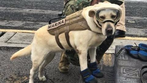 Meet Frida, the dog that's saving people in earthquake-hit Mexico