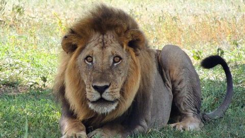 Cecil's killer becomes a recluse