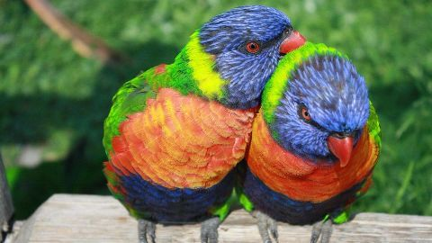 SC to decide if exotic pet-birds will fly