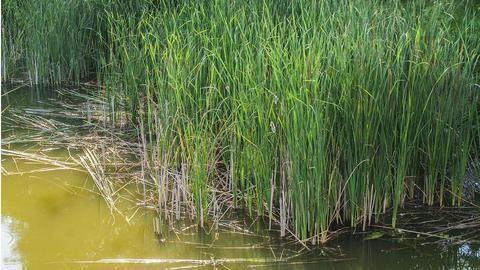 Naini Lake sacrificed at the altar of BJP-AAP tussle