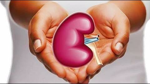 Dead girl's kidneys transplanted to two renal patients